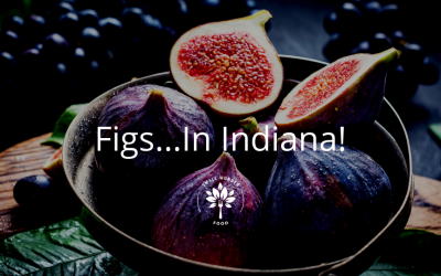 Figs…In Indiana!